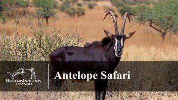 Antelope-Safari-Part1234