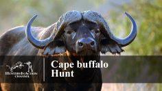 Cape-buffalo-hunt