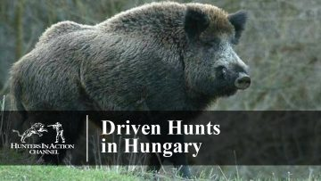Driven-Hunts-in-Hungary