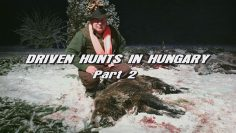 Driven-Hunts-in-Hungary—Part-2