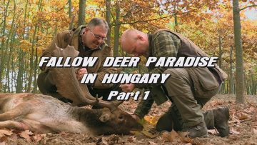 Fallow-Deer-Paradise-in-Hungary—Part-1