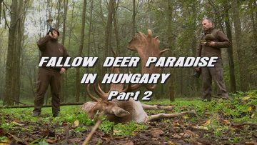 Fallow-Deer-Paradise-in-Hungary—Part-2