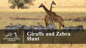 Giraffe-and-Zebra-Hunt