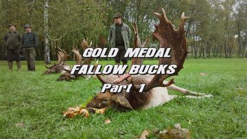 Gold-Medal-Fallow-Bucks—Part-1