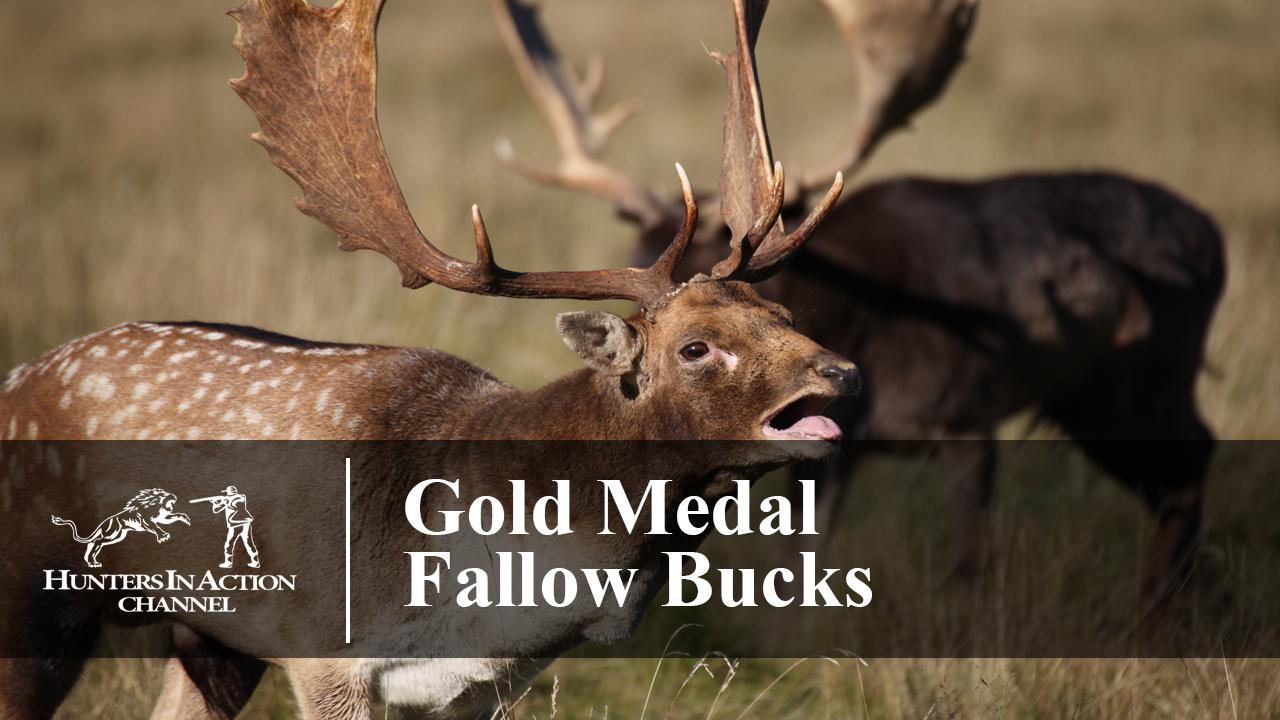 Gold-Medal-Fallow-Bucks