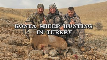 Konya-Sheep-Hunting-in-Turkey