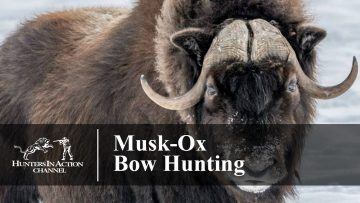 Musk-Ox-Bow-Hunting