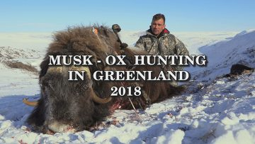 Musk-Ox-Hunting-in-Greenland-2018