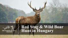 Red-Stag-Hunting-in-Hungary