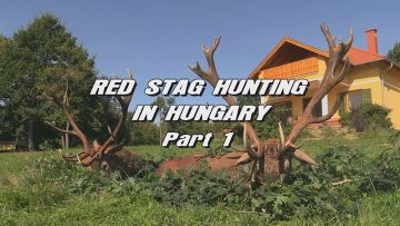 Red-Stag-Hunting-in-Hungary—Part-1