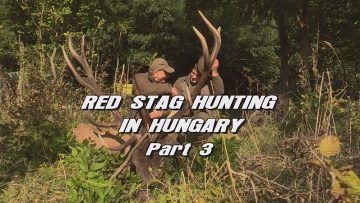 Red-Stag-Hunting-in-Hungary—Part-3