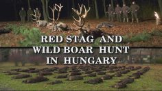 Red-Stag-and-Wild-Boar-Hunt-in-Hungary