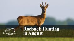 Roe-Buck-Hunting-in-August-