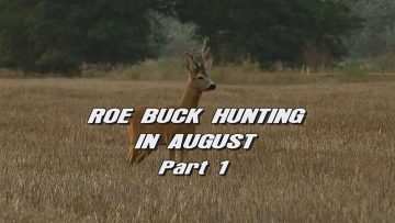 Roebuck-Hunting-in-August—Part-1