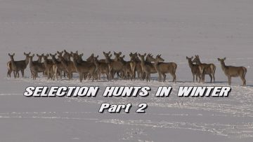 Selection-Hunts-in-Winter—Part-2