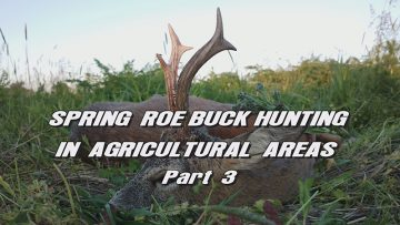 Spring-Roe-Buck-Hunting-in-Agricultural-Areas—Part-3