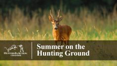 Summer-on-the-Hunting-Ground