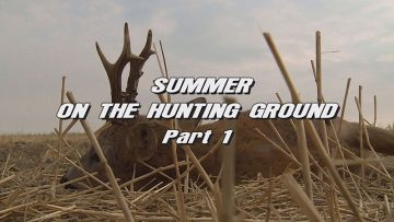 Summer-on-the-Hunting-Ground—Part-1