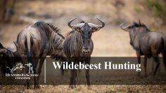 Wildebeest-Hunting