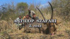 Antilop szafari 2