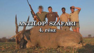 Antilop szafari 4