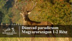 Dámvad-paradicsom-Magyarországon