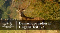 Damwildparadies-in-Ungarn-Teil1-2