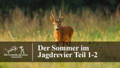 Der-Sommer-im-Jagdrevier-Teil1-2
