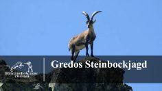 Gredos-Steinbockjagd