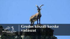 Gredos-kőszáli-kecske-vadászat