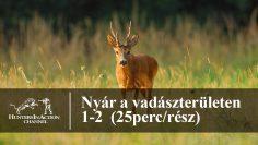 Nyár-a-vadászterületen-1-2