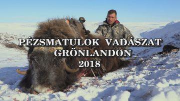 Pezsmatulok vadaszat Gronlandon 2018