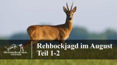 Rehbockjagd-im-August-Teil1-2