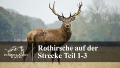 Rothirsche-auf-der-Strecke-Teil-1-3