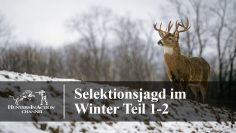 Selektionsjagd-im-Winter-Teil1-2