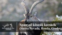 Spanyol-kőszáli-kecskék-Sierra-Nevada,-Ronda,-Gredos