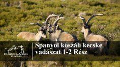 Spanyol-kőszáli-kecske-vadászat