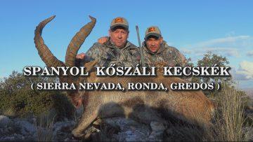 Spanyol koszali kecskek-Sierra Nevada, Ronda, Gredos