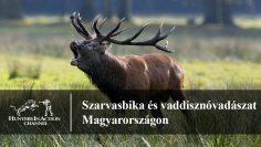 Szarvasbika-és-vaddisznóvadászat-Magyarországon