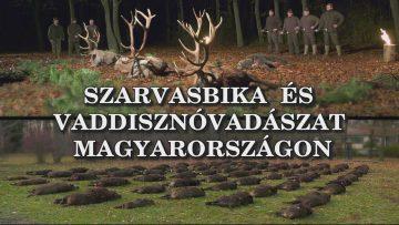 Szarvasbika es vaddisznovadaszat Magyarorszagon