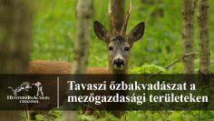 Tavaszi-őzbakvadászat-a-mezőgazdasági-területeken