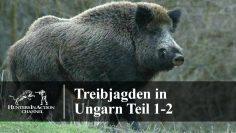 Treibjagden-in-Ungarn-Teil-1-2