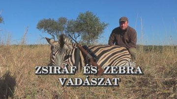 Zsiraf es zebra vadaszat