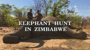 Elephant-hunt-in-Zimbabwe