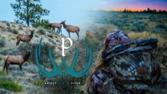 Montana-Archery-Elk-Hunt-with-Kristy-Titus