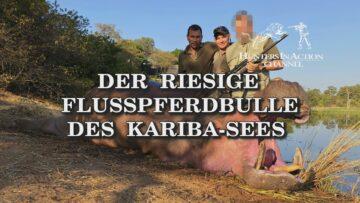 der-riesige-flusspferdbulle-des-kariba-sees